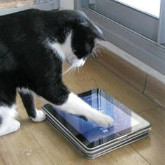 6 Apps That Turn Your iPad Into An Overpriced-Yet-Awesome Cat Toy - Cats are awesome. We all agree on that (if you don't, I have a feeling you might not want to turn your iPad into a cat toy. Just saying). I must admit, though, that even for a cat lover like me, the idea of letting my cats play with my precious iPad seemed a bit crazy…