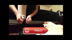 Baby Monkey morning routine  My cat Baby Monkey helps me get my boots on every morning and then we have some love Cute cat kitty play…