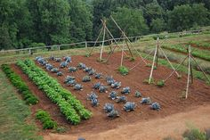 Why Vegetable Rotation is Key for Organic Gardening