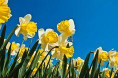 #spring #lente #boenderpint