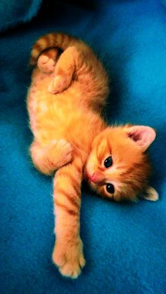 """Adorable tiger striped kitten. Photo credit: """"Lazy day""""s by Rinny-Le."""