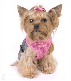 Ultra Comfort Mesh Harness - Hip Doggie