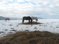 Couple of horses in snowy landscape Couple Pictures, Photo Editing, Elephant, Horses, Stock Photos, Fine Art, Landscape, Couples, Creative