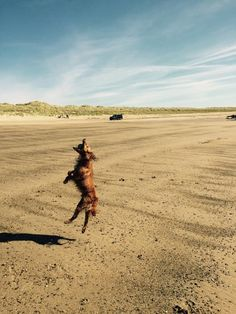 #SilverBayDays Dog | Silver Bay Holiday Village