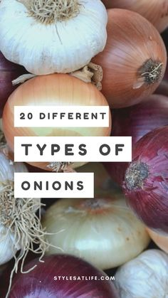 You won't believe it; there are several types of onions with different uses, however not many know them. We have worked around and rounded up the world's famous best types of onions name in the world. Types Of Onions, Different Types, Garlic, Vegetables, Recipes, Food, Essen, Vegetable Recipes, Eten