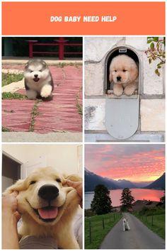 Dog baby need help😅 perros Bebes Dog baby need help Dog Baby, Baby Needs, Labrador Retriever, Animals, Labrador Retrievers, Animaux, Animales, Animal, Dieren