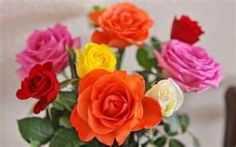 Roses ~ Also the June Birth Flower