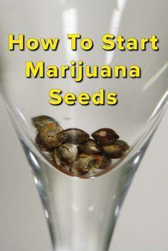 How to Grow Weed: Starting Marijuana Seeds