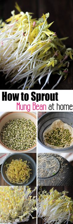 Homemade mung bean sprouts with traditional Chinese way and a simple salad recipe. Bean Sprout Salad, Bean Sprout Recipes, Sprouts Salad, Bean Recipes, Bean Sprouts Growing, Growing Beans, Raw Vegan Recipes, Vegetarian Recipes, Healthy Recipes