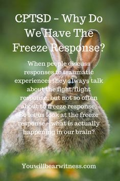 When people discuss responses to traumatic experiences they always talk about the fight/flight response, but not so often about to freeze response. So let us look at the freeze response – what is actually happening in our brain? Emotional Abuse, Emotional Intelligence, Trauma Therapy, Occupational Therapy, Nicotine Addiction, Ptsd Awareness, Complex Ptsd, Post Traumatic, Stress Disorders