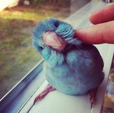 最速!2秒でTwitterパスワード流出されているかチェックする方法   A!@attrip