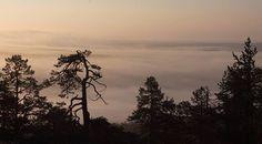 Puiden silhuetteja, kuvaaja Ari Kekki Finland, Celestial, Sunset, Outdoor, Sunsets, Outdoors, Outdoor Living, Garden
