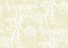 Cow Parsley (95/9053) - Cole & Son Wallpapers - A large scale all over design of cow-parsley, in off white on a light gold background – giving a magical delicate effect.  Available in other colours. Please ask for a sample for a true colour match. Paste-the-wall product.