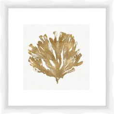 Gold Coral Framed Giclee Print