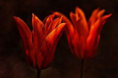 'Leuchtend' von Friedhelm Peters bei artflakes.com als Poster oder Kunstdruck $16.63