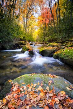 Little River off of Tremont Rd. in Great Smoky Mountains National Park with fall colors on display