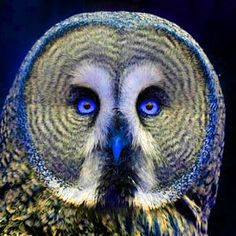 http://godsprey.files.wordpress.com/2009/07/great_grey_owl.jpg