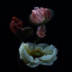 Blütenrausch von Christine Ellger
