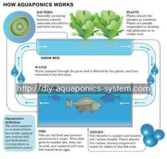 cost of aquaponics system - portable hydroponic greenhouse.hydroponics greenhouse construction 2077504788