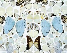 Damien Hirst, Sympathy in White Major – Absolution II, 2006