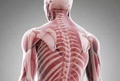 Здоровье в наших руках: СЕКРЕТ  МЫШЦ, ОТКЛАДЫВАЮЩИЙ СТАРОСТЬ