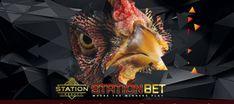 Mengenal Katuranggan Jengger Pada Ayam Aduan | S128 Vip Lion Sculpture, Owl, Statue, Bird, Animals, Animales, Animaux, Owls, Birds