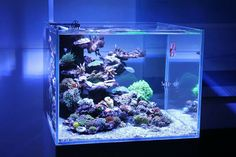 Saltwater Aquarium - Find incredible deals on Saltwater Aquarium and Saltwater Aquarium accessories. Let us show you how to save money on Saltwater Aquarium NOW! Saltwater Aquarium Setup, Coral Reef Aquarium, Saltwater Fish Tanks, Nano Aquarium, Home Aquarium, Aquarium Design, Marine Aquarium, Aquarium Fish Tank, Aquarium Accessories