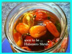 DIY Habanero Shrub ~ Hot Stuff for winter health! No Salt Recipes, Herb Recipes, Real Food Recipes, Cooking Recipes, Drink Recipes, Cooking Tips, Healthy Recipes, Shrub Recipe, Slow Cooker