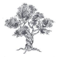 Olive Tree by Demetrius Goncalves @copyright Orfion