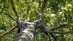 arbreWL.JPG (Image JPEG, 700×400 pixels)