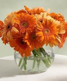 Youthful And Fun Same Day Flower Delivery Most Popular Flowers Flower Delivery