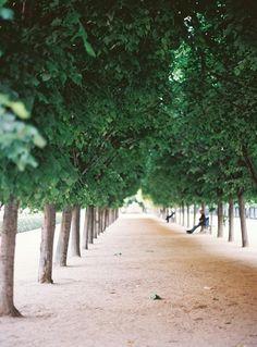 Garden Visit: The Tuileries at Sunset, with Alice Gao - Gardenista Tuileries Paris, Jardin Des Tuileries, Paris Garden, Pere Lachaise Cemetery, Tree Lined Driveway, Linear Park, Urban Park, Chestnut Horse, Travel Memories