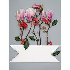 Gestaltung mit Magnolien Blüte.