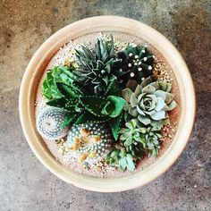 Good morning from San Diego!  #shoppigment #prettyplanting #oneofakind…