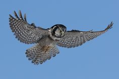 Beautiful, although I've heard owls are not too bright...