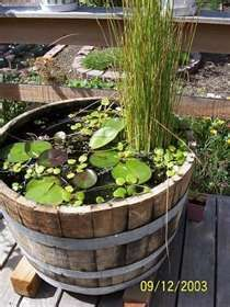 Container Ponds Clear Algae Free Pond Water and Healthy Fish...  Cutest little backyard pond ever.