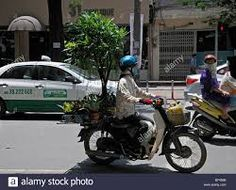 Image result for carrying plants