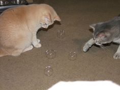 Found on Bing from catbox.com.au Cats Playing, Dogs, Animals, Animaux, Doggies, Animal, Animales, Pet Dogs, Dog