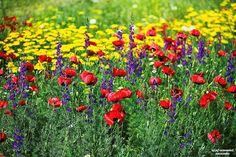 A atitude de amor com as flores dos armênios sempre os persuadiu a mostrar as suas emoções através das flores em várias ocasiões As flores populares usadas como presentes e saudações para eles são tulipas, orquídeas, gladíolos, lavandas, gerberas, rosas e cravos .