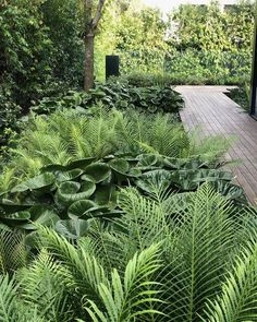 "FORM on Instagram: ""Autumn greenery . . . . . . . . . #formlandscaping #gardensbyform #shapedbyform #FORM #gardendesign #plantingdesign #landscapedesign…"""