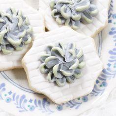 Succulent Sugar Cook