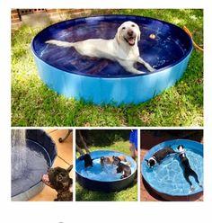 Kopeks Foldable Grey Grooming & Bathing Pool Tub for Dogs, Large, Grey / Blue Dog Swimming Pools, Portable Swimming Pools, Dog Pools, Le Plus Grand Chien, Pet Dogs, Dog Cat, Baby Pool, Kiddie Pool, Accesorios Casual