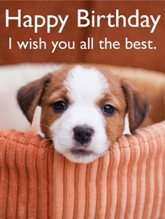 Send Free I Wish You All the Best - Animal Birthday Card to Loved Ones on Birthday & Greeting Cards by Davia. It's free, and you also can use your own customized birthday calendar and birthday reminders.