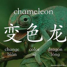 Camaleón( el que cambia de color)