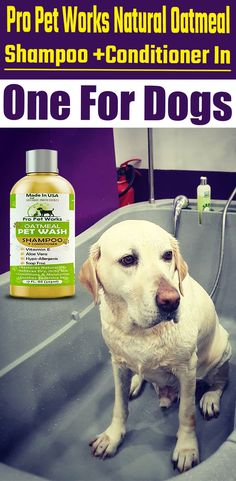 Our Oatmeal Dog Shampoo And Conditioner is recommended by Vets and Specially formulated for pets with allergies to food, grass and flea bites.  #dogshampoo #dogshampooplusconditioner #dogconditioner