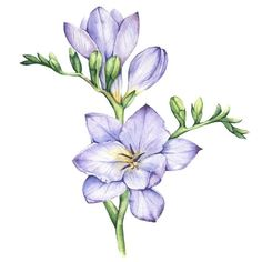 You can buy this (and 8 more) freesia flower in my shop. The link is in my bio                       div class=