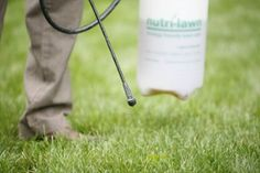 Traditional weed control is applied as a post-emergent spray, meaning only the weeds that are actively growing and present at the time of application are controlled. Grass Weeds, Garden Maintenance, Landscape Services, Weed Control, Garden Care, Garden Landscaping, Keep It Cleaner, Signage