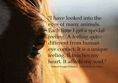 I have looked into the eyes of many animals...