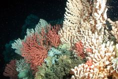 The growing acidity of the world's oceans could cost the global economy $1 trillion by 2100 if humans don't stop putting so much carbon dioxide into the atmosphere, according to an extensive report compiled by 30 experts worldwide and released Wednesday by the U.N. Convention on Biological Diversity. A Norwegin coral reef with gorgonian and stony corals in Norway.