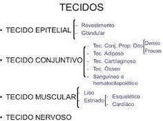 Resultado de imagem para tecido conjuntivo resumo